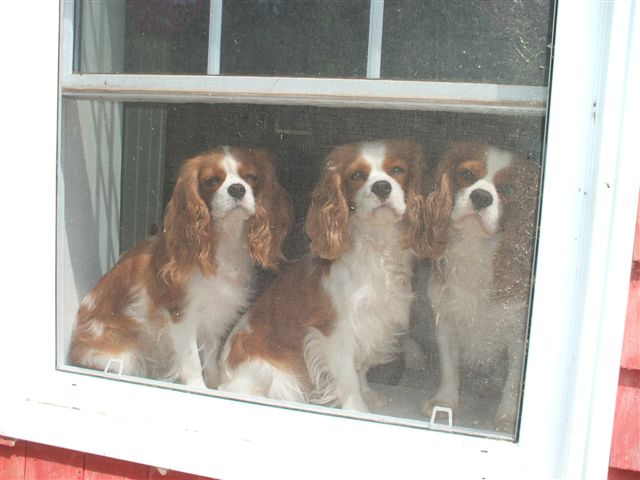 Casey, Caleigh, and Jake sitting pretty in the window.
